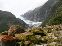 New Zealand - P1020125 Franz Josef, glacier valley walk